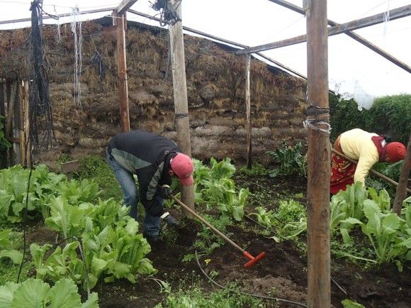 Fortalecimiento de pequeñas productoras rurales de plantas aromáticas en Salinas (Ecuador)